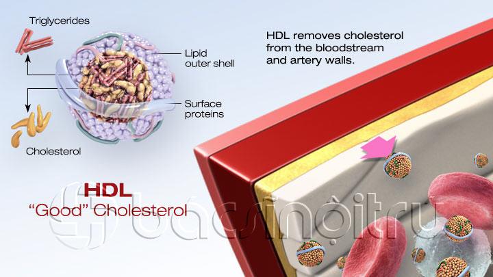 Cholesterol-Score-2