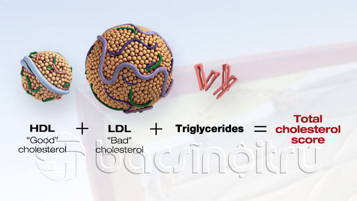 Good Cholesterol + bad Cholesterol + Triglycerides  =Total