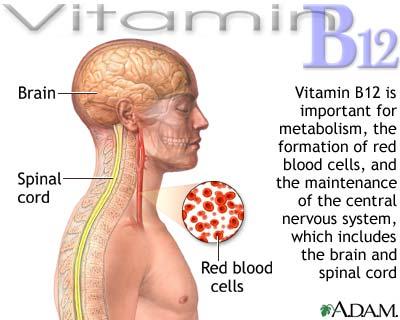 Vitamin B12 quan trọng với hệ thần kinh, tạo máu và nhiều vai trò khác